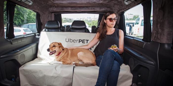 Uber lance une option UberPet pour voyager avec son animal de compagnie