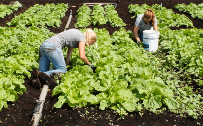 Organic farming produces more carbon emissions, study finds