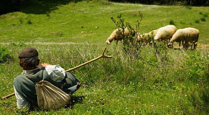 Göygöldə 58 yaşlı çoban itkin düşüb - FOTO
