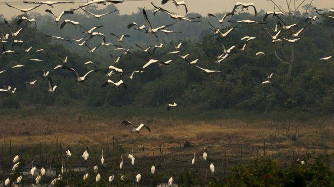 Brazil wildfires: Blaze advances across Pantanal wetlands