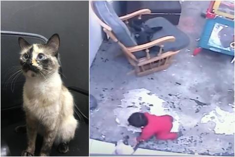 Una gata le salva la vida a un bebé en Colombia