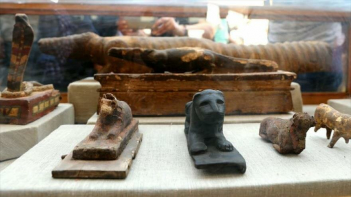 Hallan en Egipto un felino momificado parecido a un león
