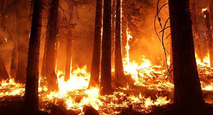 Incendio en Chile obliga a evacuar cerro de Valparaíso