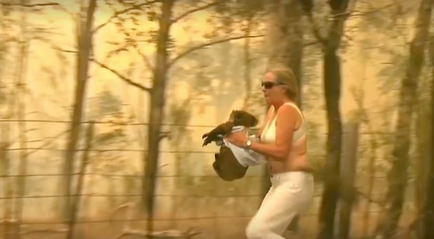 Woman saves scorched koala in Australian bushfire-  NO COMMENT