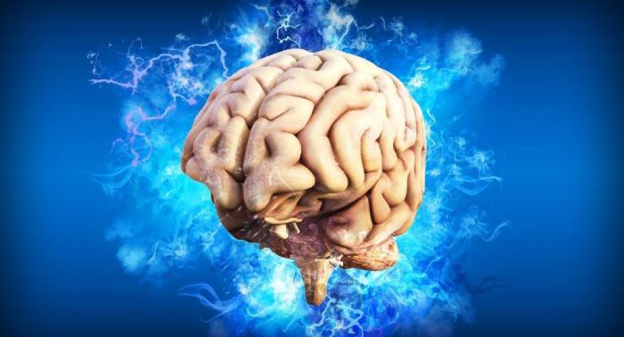 ¿Qué le pasa a tu cerebro cuando le falta la otra mitad? Este es su