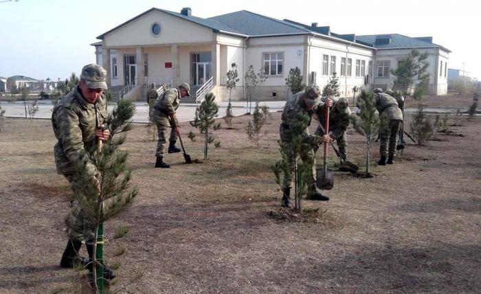 Orduda ağacəkmə aksiyası keçirilir