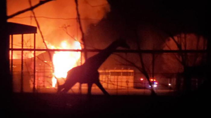 Verheerendes Feuer wütet in US-Wildtierpark