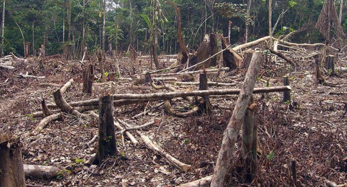 Deforestación sigue ocurriendo en Amazonía brasileña pese a medidas oficiales prometidas