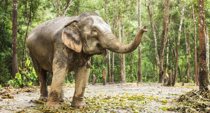 بالفيديو... فيل يتعامل بذكاء مع سياج مكهرب للحصول على الطعام