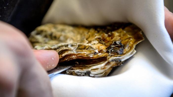 Essens-Faustregel wohl 4000 Jahre alt