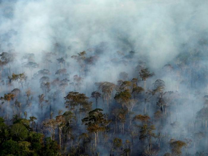 La déforestation de l