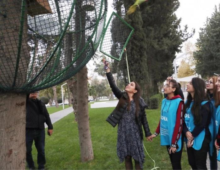 IDEA tərəfindən Bakıda tutuquşular məskunlaşdırılır - FOTOLAR