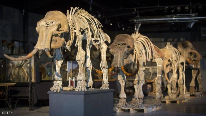 العثور على عظام حيوان عاش قبل أكثر من 140 قرنا