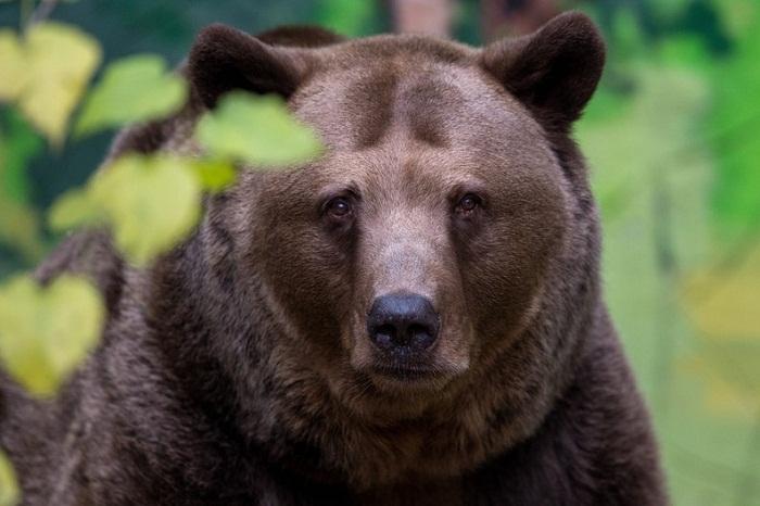 USA: des ours et des hommes vont s'affronter pour une émission de télévision