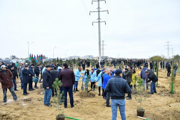 Plus de 650 mille arbres plantés dans le cadre de la campagne organisée à l'initative de Mehriban Aliyeva