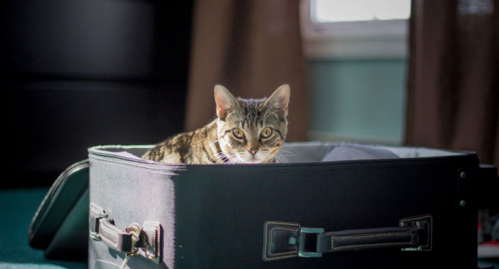 ¿Cuánto cuesta viajar en avión con tu mascota?