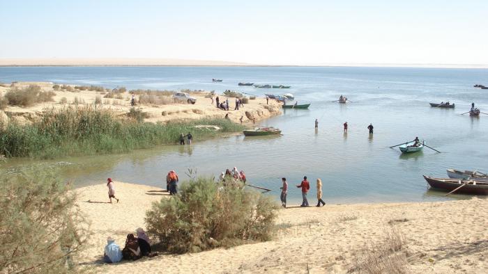 Identifican a una ballena con patas en un esqueleto hallado en un desierto de Egipto