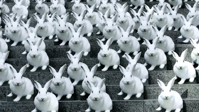 Crean un conejo impreso en 3D con las instrucciones sobre cómo imprimirlo contenidas en ADN