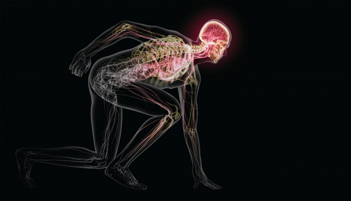 Why your brain needs exercise-  iWONDER