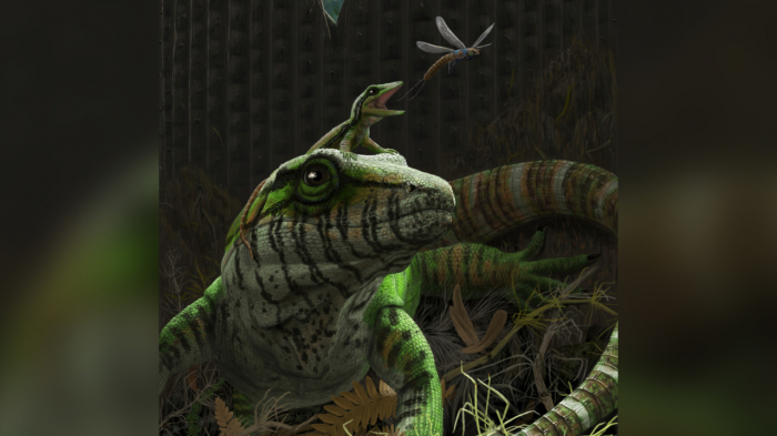 300m-year-old lizard discovered in Canada is earliest known example of animal parental care