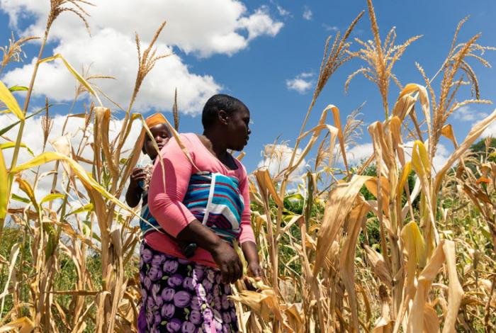 Zimbabwe edges closer to famine