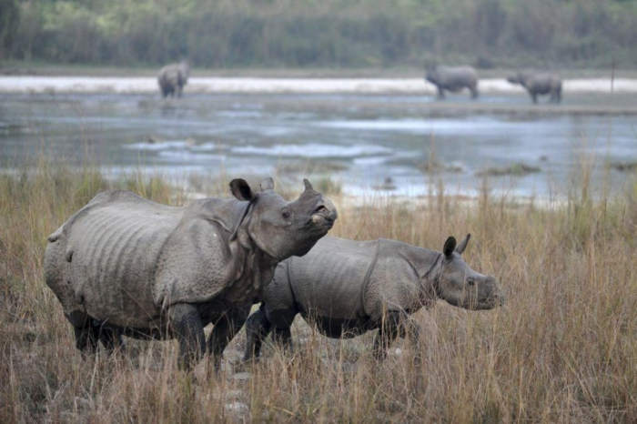 Afrique du Sud: 16 ans de prison pour trois braconniers de rhinocéros