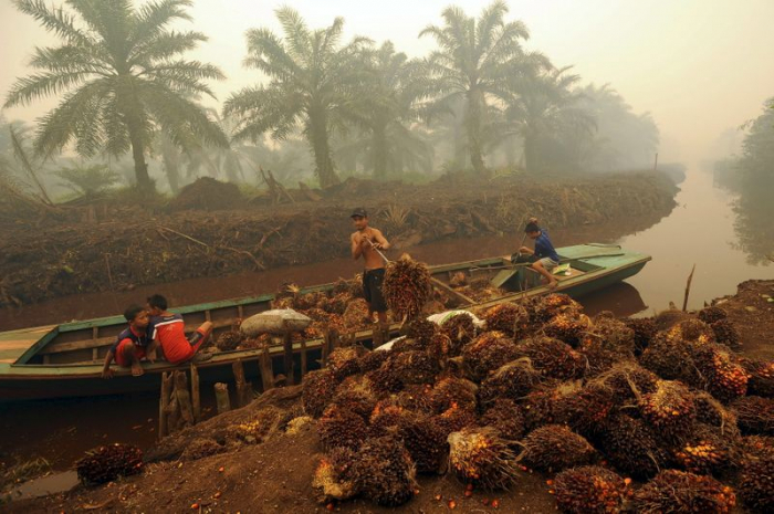 Indonesia warns on EU trade deal, dairy imports amid palm oil spat