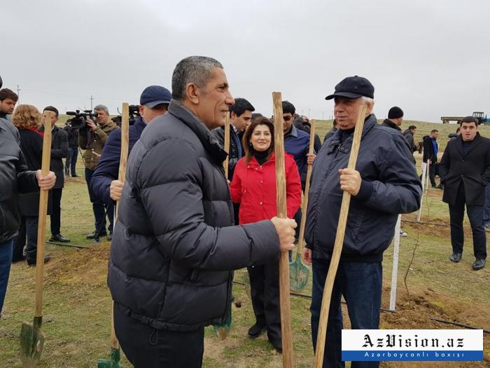 Məmurlar və deputatlar ağac əkdilər - FOTOLAR