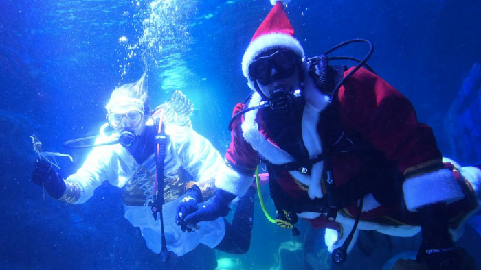 Santa Claus moves from North Pole to Berlin aquarium-   NO COMMENT