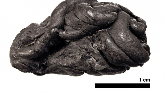 Ancient chewing gum reveals life of Stone Age woman born almost 6,000 years ago