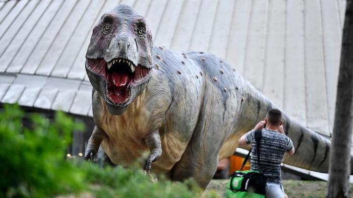 Studie widerlegt Theorie von Mini-T-Rex