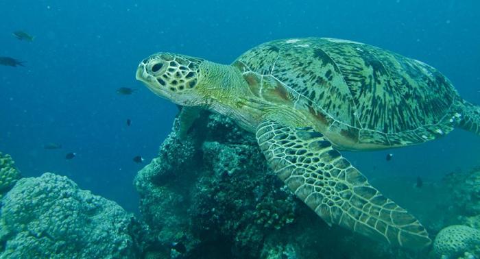 Murieron 293 tortugas marinas en Pacífico del sur de México tras ingerir algas tóxicas