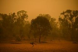 Los incendios en Australia devastan casi el 80 por ciento de una región boscosa Patrimonio de la Humanidad