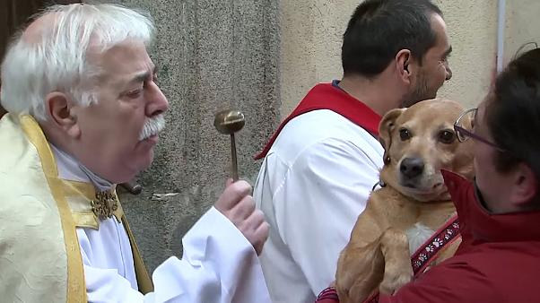 Believers and Retrievers: pets taken to church for special blessings in Madrid -   NO COMMENT