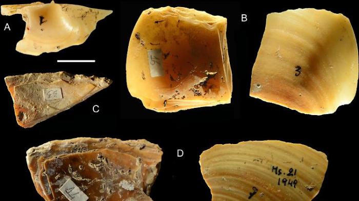 Neandertaler tauchten nach Muscheln