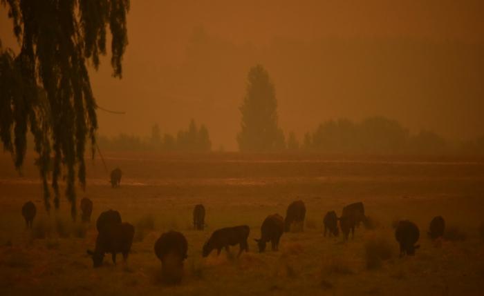 Dust storms and giant hail batter bushfire-weary Australia
