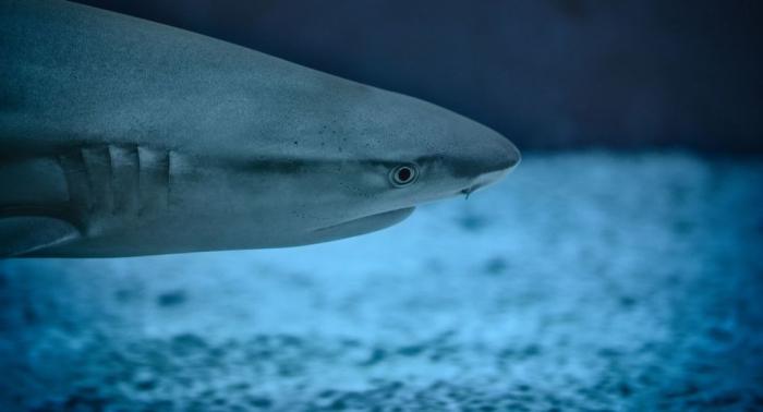 """""""Laufender Hai""""  : Neue Arten im tropischen Pazifik entdeckt –   Video"""