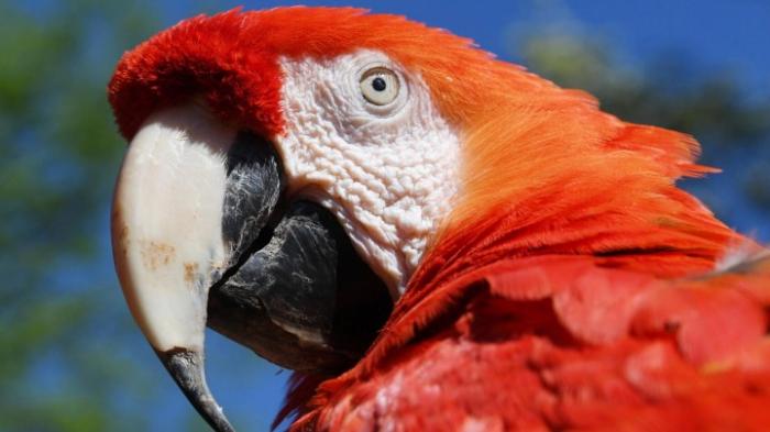 Papageien sind intelligent und hilfsbereit