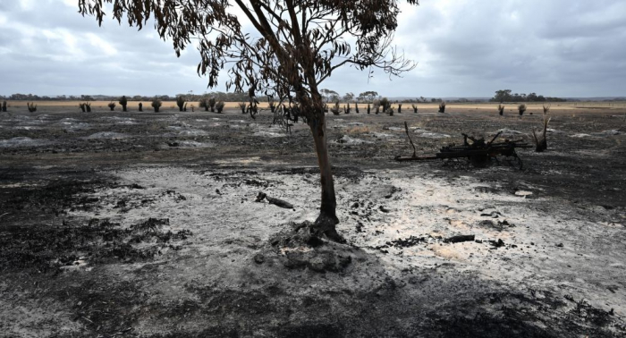 حتى الأبقار فرحت... شاهد كيف استقبل الأستراليون هطول المطر