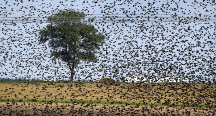 """بعدما قطعت مسافة 1662 كيلومترا… حل لغز """"الطيور النافقة"""" في بريطانيا"""