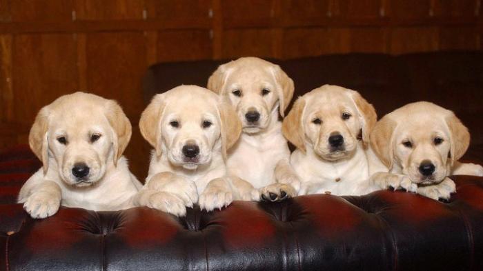 Umweltausschuss will illegalen Handel mit Haustieren eindämmen
