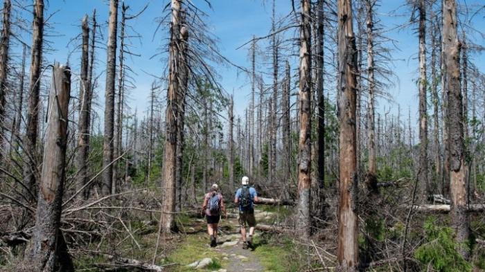 Forscherin warnt vor Waldbrandgefahr im Harz