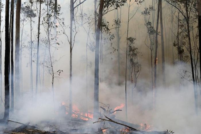 Australie:  les habitats d