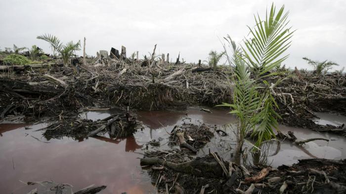How do we go palm oil free?-   iWONDER