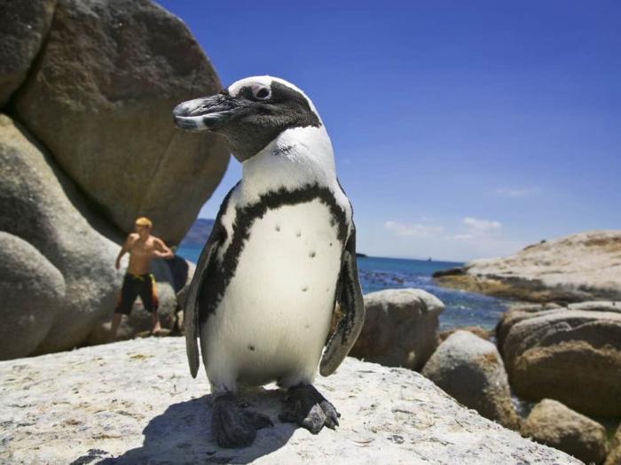 Penguin language