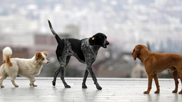 La Eurocámara pide un sistema europeo obligatorio para identificar a perros y gatos