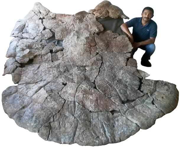 De tres metros y con cuernos, la tortuga más grande que haya existido jamás