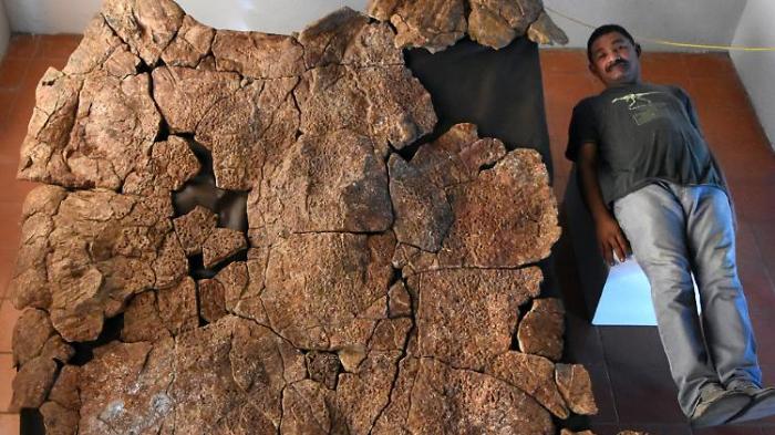 Überreste meterlanger Schildkröten entdeckt