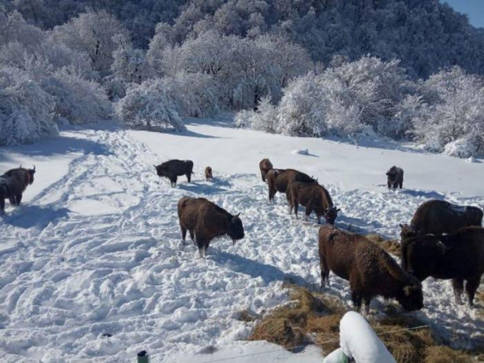 Azərbaycanın milli parklarının qış mənzərələri - FOTOLAR