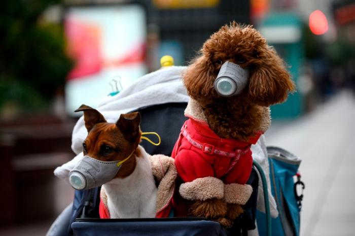 "Dog in Hong Kong tests ""weak positive"" for coronavirus"
